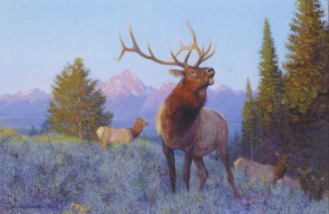 September Dawn -Elk - 1997 - Oil On Panel -  10 x 14