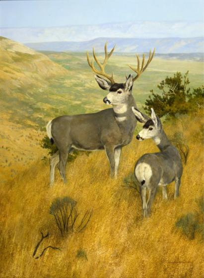"On the Mogollon Rim, Arizona - Mule Deer - Oil On Panel - 25 x 18 1/2 - ""Game Animals of North America"" by Bryon Dalrymple"