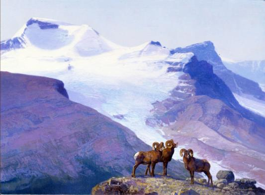 Rocky Mountain Big Horn Sheep - 1989 - Oil On Canvas - 11 x 14