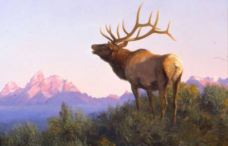 Big Game Animals of North America