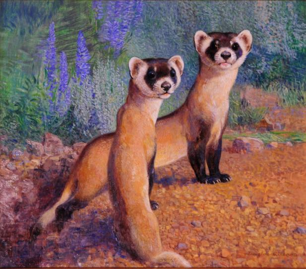 Come Back Kids - Black Footed Ferret - 2010 - Oil On Panel - 11 x 12 1/2