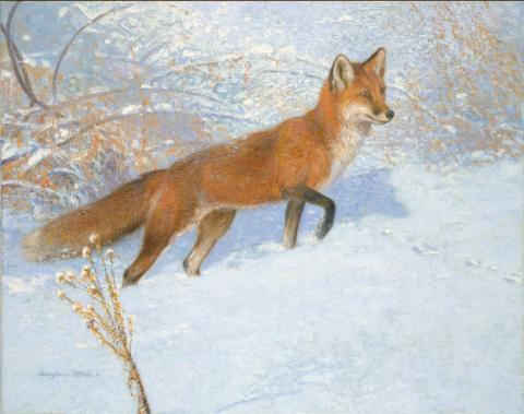 Red Fox - 2010 - Oil On Canvas - 11 x 14