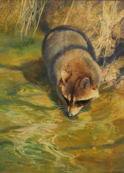 "Raccoon - 1977 - Oil On Panel - 12 x 9 -  ""Game Animals of North America"" by Byron Dalrymple"