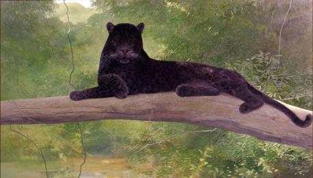 Repose - Black Leopard - 1980 - Oil On Panel - 18 x 30
