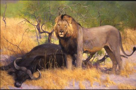 Catch of the Day - Lion and young Cape Buffalo - 2002 - Oil On Panel - 32 x 45
